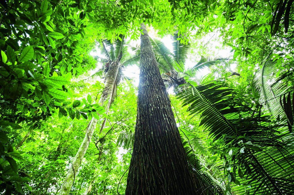Urwald im Amazonas - grün, undurchdringlich, geheimnisvoll.