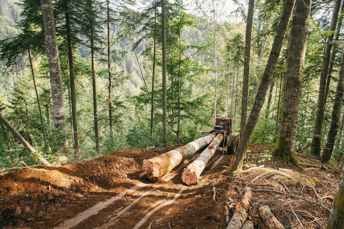Während die Greenpeace-Aktivisten die verbliebenen rumänischen Urwälder dokumentieren, ist es für viele dieser Gebiete zu spät. Eine Analyse von Greenpeace zeigt, dass in zwei Tälern, die in der Nähe der Urwaldschutzstation liegen, in den vergangenen elf Jahren mehr als ein Drittel der damals registrierten Wälder zerstört wurden.