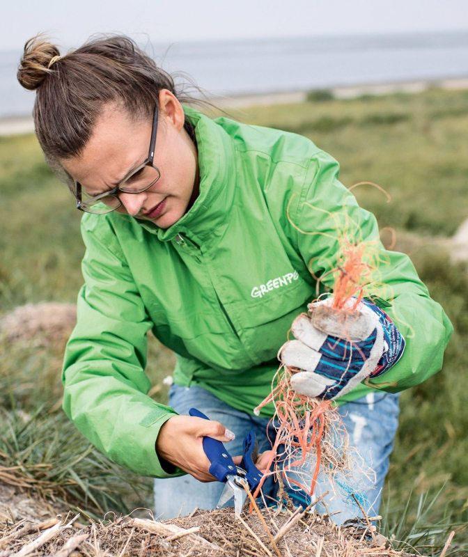 Mit einer Gartenschere schneidet Lisa Maria die Reste eines Fischernetzes aus dem Nest. Erst als die Vögel ihr Brutgebiet verlassen hatten, konnten die Aktivisten tätig werden.