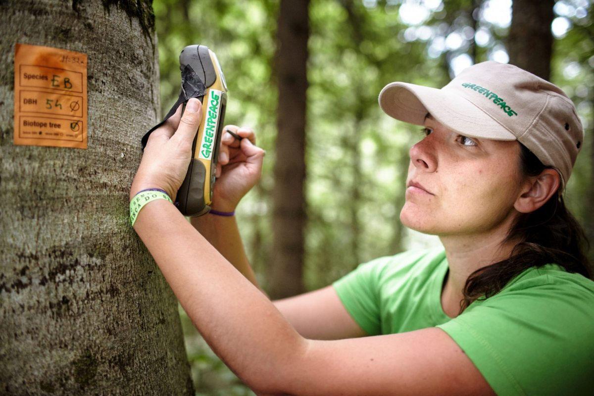 Greenpeace-Aktivisten aus ganz Europa arbeiten gemeinsam in einer Waldschutzstation in Rumänien.