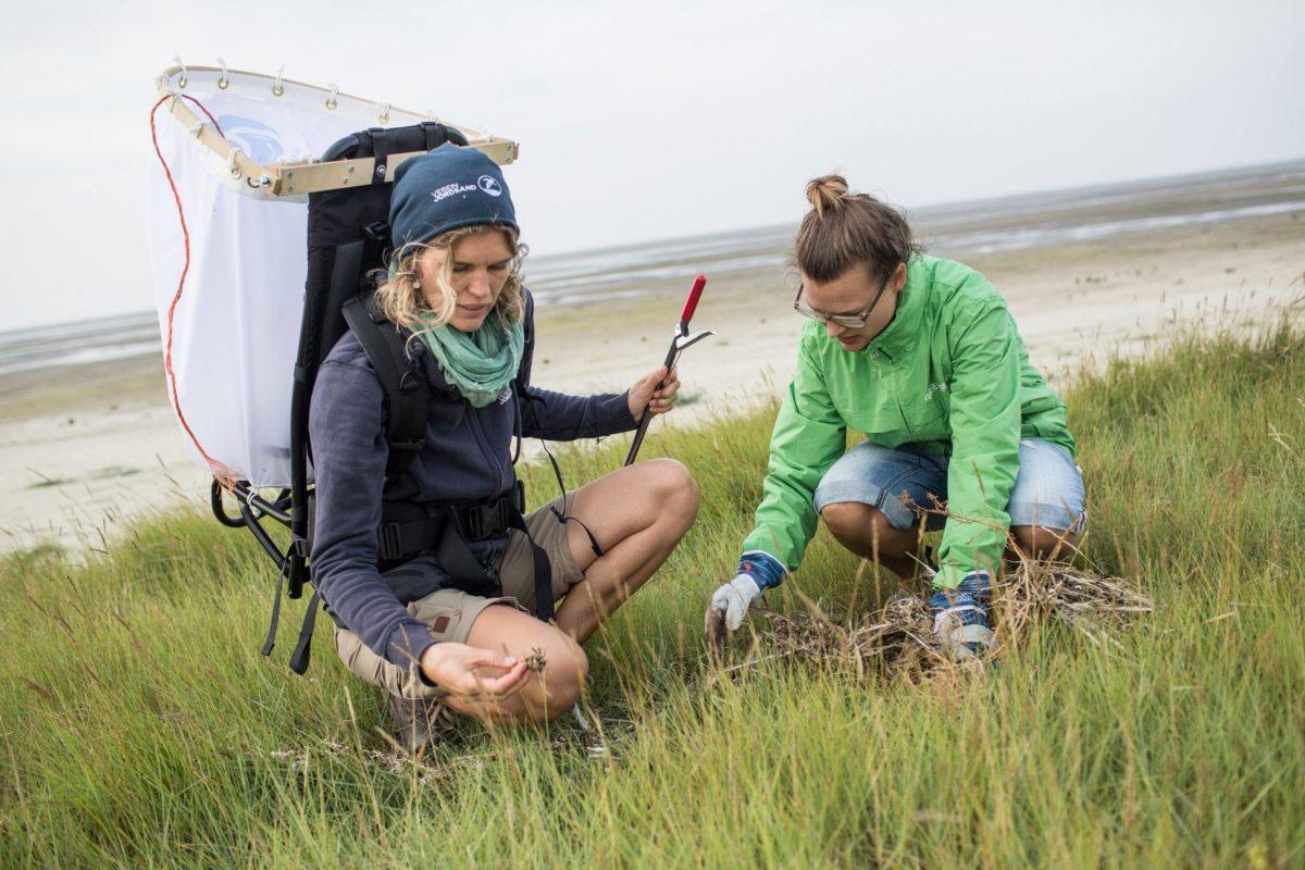 Greenpeace-Aktivisten und Mitglieder des Verein Jordsand sammeln im September 2016 Plastikmüll und anderen Abfall auf der Vogelschutzinsel Nigehörn im Wattenmeer.
