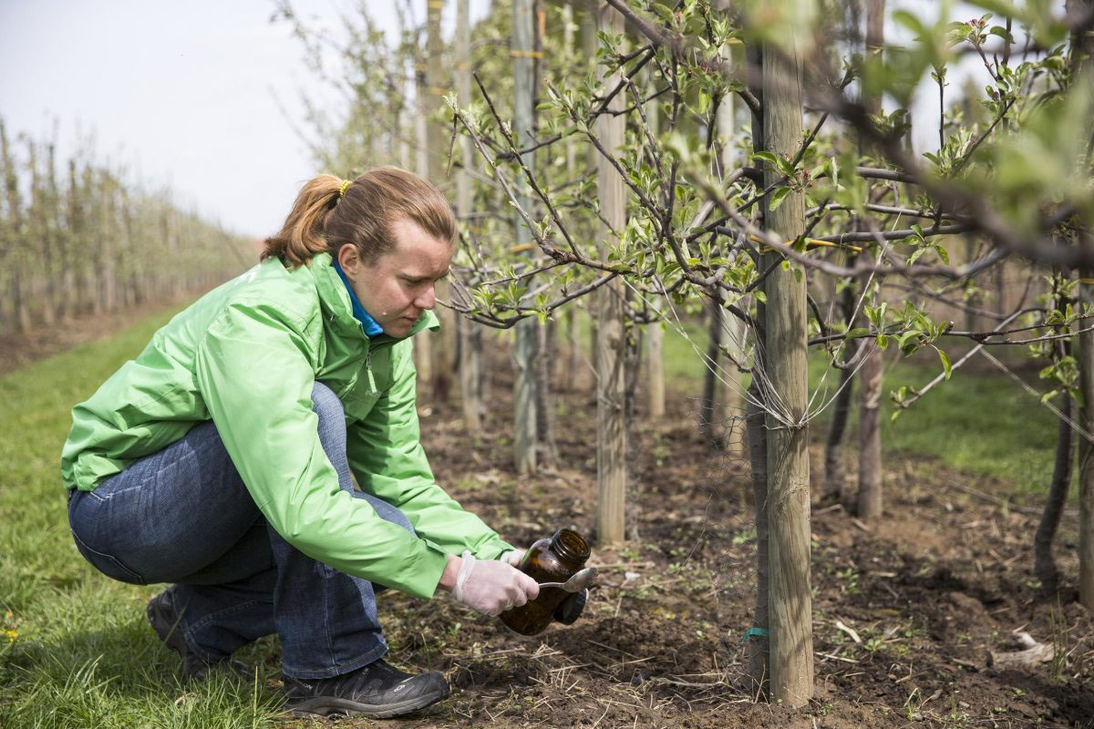 Greenpeace Kampaignerin Christiane Huxdorff nimmt in einer Apfelplantage im Alten Land Wasser- und Bodenproben. Die Proben werden auf Pestizide untersucht.