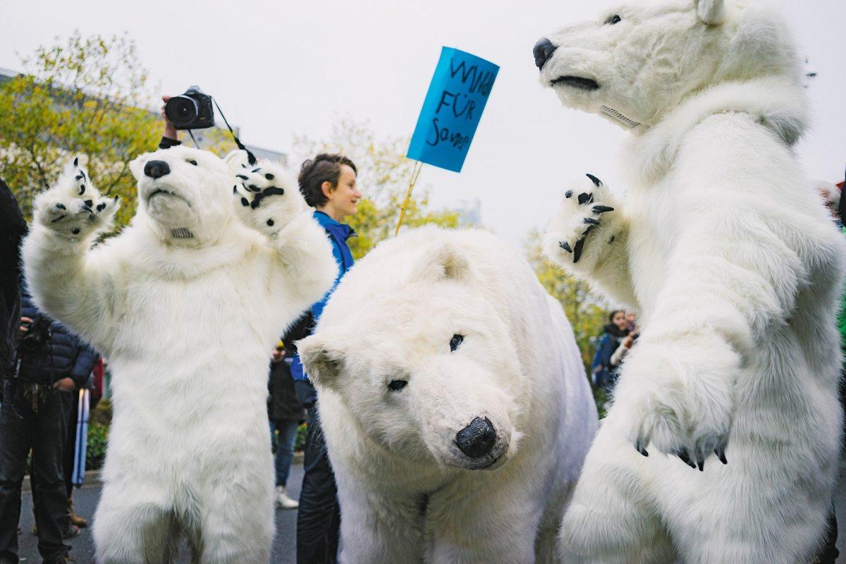 Das Eis der Arktis schmilzt – Eisbären mögen die Erderwärmung nicht.