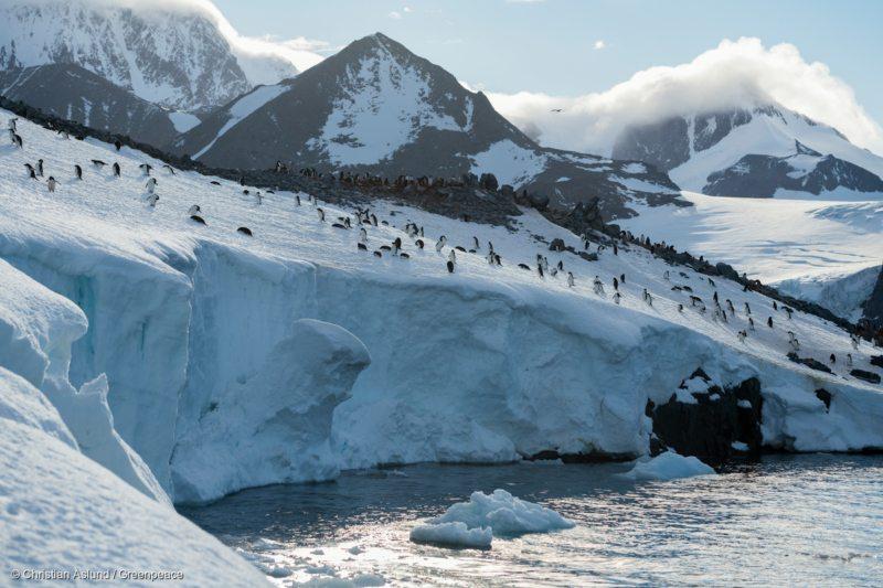 Die fantastische Bergwelt der Antarktis beeindruckt - umso mehr, wenn sich unzählige Pinguine an ihren eisigen Kanten tummeln. Eine der größten Adélie Pinguin-Kolonien lebt in der Hope Bay auf der Trinity-Halbinsel, nahe dem Weddellmeer.