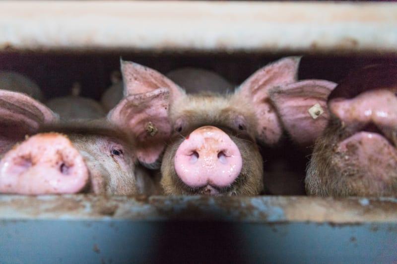 Verstöße gegen das Tierschutzgesetz bleiben bisher oft ungeahndet