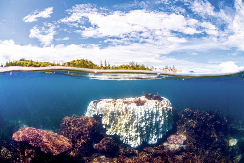 Tote Korallen im Great Barrier Reef vor der Nordostküste Australiens
