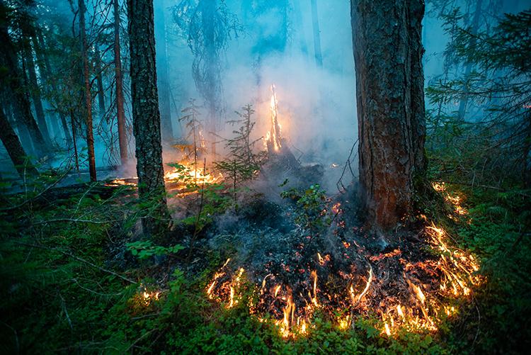 Wie in vielen Regionen der Welt brannte es im vergangenen Jahr auch in Sibirien. Greenpeace-Firefighter halfen mit, diesen Brand im Naturschutzgebiet Denezhkin Kamen zu löschen